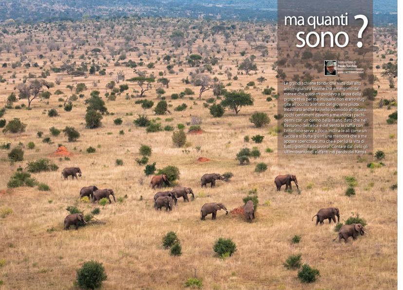 078-085 Censimento Elefanti FOTO OK.qxp_ORIGINALE GRANDI REPORTA