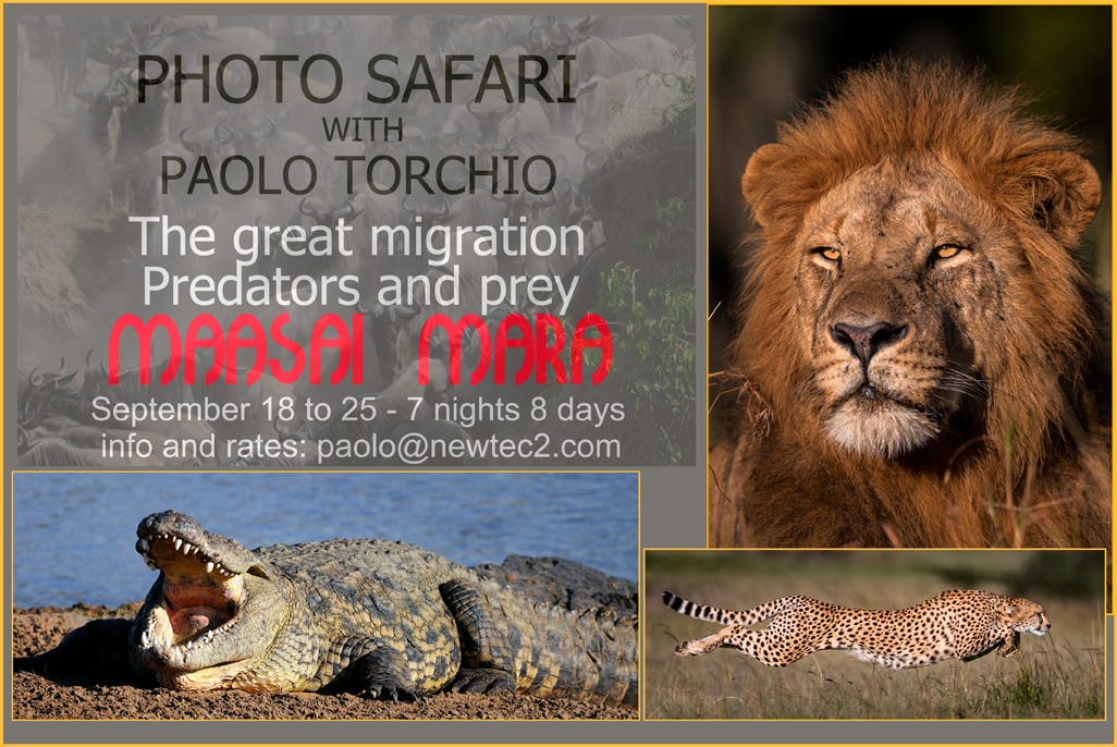 ADVERT-PHOTO-SAFARI-SEPT-lr